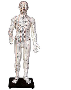 akupunktur ohrakupunktur dr dr m hlberger zahn rztin. Black Bedroom Furniture Sets. Home Design Ideas